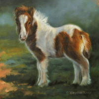 'Mini shetlander veulen', 25x25 cm, olieverf schilderij (verkocht)