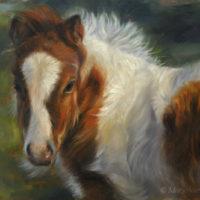 'Mini shetlander veulen', 24x18 cm, olieverf schilderij (NTK)