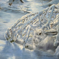 'Sneeuwhaas', 35x30 cm, olieverf schilderij, €1150 incl. lijst