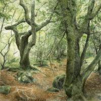 'Sticklepath', 60x60 cm, aquarel schilderij (verkocht)
