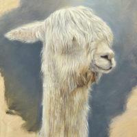 'Suri alpaca', 24x30 cm, olieverf schilderij, €1050 incl. lijst