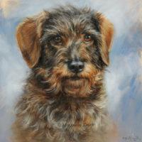 'Ruwharige teckel' portret, 20x20 cm, olieverf schilderij (verkocht/opdracht)