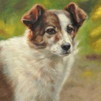 'Teddy', 20x30 cm, olieverf schilderij (verkocht/opdracht)