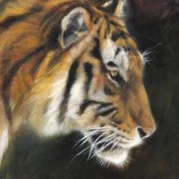 'Tijger', 18x24 cm, olieverf schilderij, €900 incl. lijst