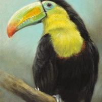 'Zwavelborsttoekan', 13x18 cm, olieverf schilderij, €750 incl. lijst