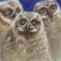 'Uilskuikens', 24x27 cm, pastel, €580 incl. lijst