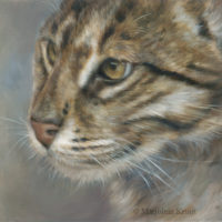 'Viskat'-wilde, 30x24 cm, olieverf schilderij, €1300 incl. lijst