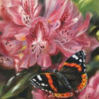 'Atalanta vlinder', 13x18 cm, olieverf schilderij (verkocht)