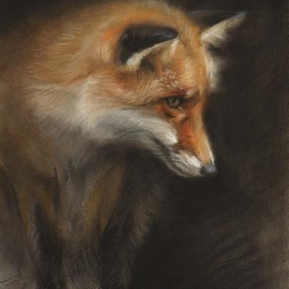 'Vos', ca. 16x20 cm, pastel (verkocht)