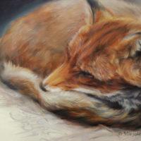 'Slapende vos', 30x24 cm, olieverf schilderij (verkocht)