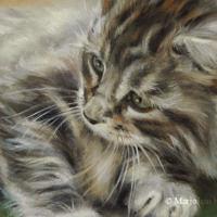 'Kitten', 20x15 cm, olieverf schilderij (verkocht)