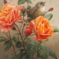 'Winterkoning in de rozen', 18x24 cm, olieverf schilderij (verkocht)