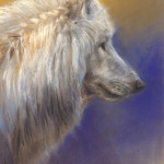 'Witte wolf' 20x30 cm, pastel, €750 incl. lijst