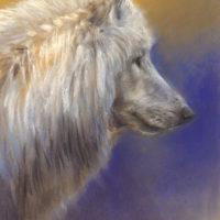 'Witte wolf'-studie, 20x30 cm, pastel, €650 incl. lijst
