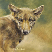 'Jonge wolf', 20x20 cm, olieverf schilderij, €950 incl. lijst