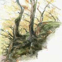 'Bomen op de rotsen' -Yorkshire, 30 x 35 cm, aquarel, (te koop)