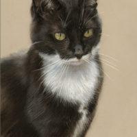 'Zwarte poes', 20x30 cm, portret in pastel (verkocht/opdracht)