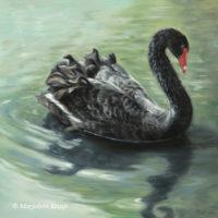 'Zwarte zwaan', 30x30 cm, olieverf schilderij, €1300 incl. lijst