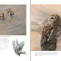 Boek dieren teken en schilderen met Marjolein Kruijt-preview5