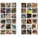 Boek inspirerend dieren teken en schilderen met Marjolein Kruijt-preview1