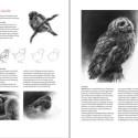 Boek inspirerend dieren teken en schilderen met Marjolein Kruijt-preview2