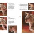 Boek inspirerend dieren teken en schilderen met Marjolein Kruijt-preview4