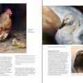 Boek inspirerend dieren teken en schilderen met Marjolein Kruijt-preview5
