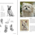 Boek inspirerend dieren teken en schilderen met Marjolein Kruijt-preview6