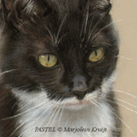 close-up pastel techniek: zwart-witte kat