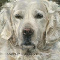 close-up olieverf techniek: witte hondenvacht