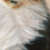 close-up olieverf techniek: witte kattenvacht