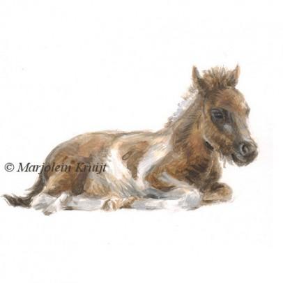 Illustratie pony veulen door Marjolein Kruijt