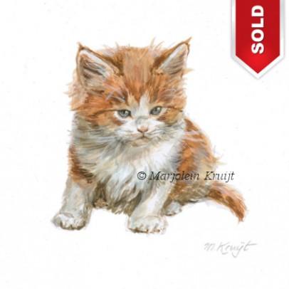 Rode maine coon kitten schilderij / illustratie in acryl door Marjolein Kruijt