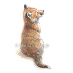 Illustratie vosje door Marjolein Kruijt