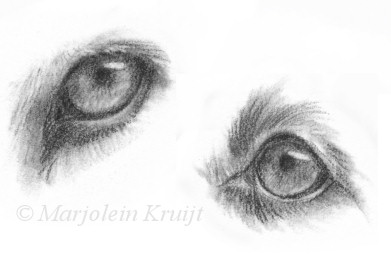 drawing eyes in pencil by marjolein kruijt