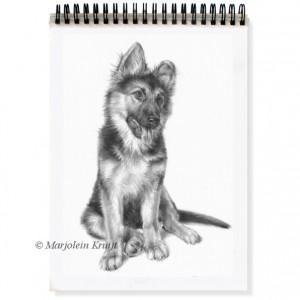 Potlood teken technieken. Dierenportretten & portret hond Marjolein Kruijt