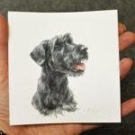 schnauzer-lyla-miniatuur-portret