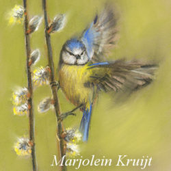 Blue tit bird pastel by Marjolein Kruijt