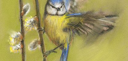 Blue tit bird pastel by Marjolein Kruijt