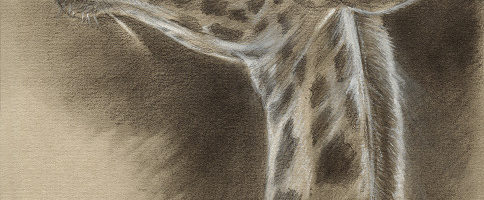 Leer tekenen als de oude meesters - Nieuw artikel door Marjolein Kruijt