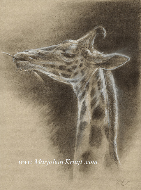 Learn to draw animals like the old masters - by Marjolein Kruijt animal artist
