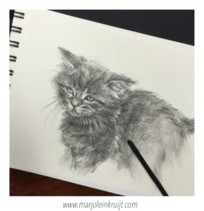Sketching kittens in charcoal - Marjolein Kruijt