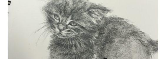Kittens tekenen in houtskool - Marjolein Kruijt