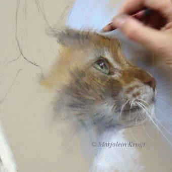 workshops masterclasses en tekenlessen in dieren tekenen en schilderen met Marjolein Kruijt