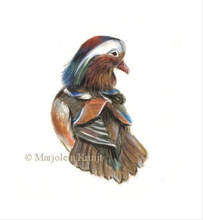 Mandarijneend acryl illustratie door Marjolein Kruijt (te koop)