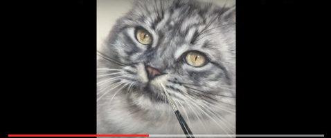 Video siberische kat dierenportret door Marjolein Kruijt
