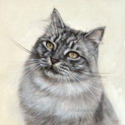 'Siberische kat', 30x30 cm, olieverf schilderij (verkocht/opdracht)
