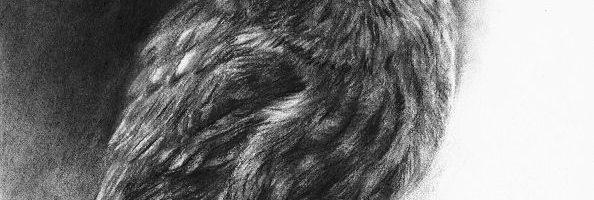 Bosuil in houtskool, tekening door Marjolein Kruijt