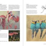 Boek Inspirerend dieren tekenen en schilderen - Marjolein Kruijt DEEL 2 - vogels schilderen