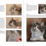 Stap-voor-stap kat schilderen: Boek Inspirerend dieren tekenen en schilderen - Marjolein Kruijt DEEL 2 preview